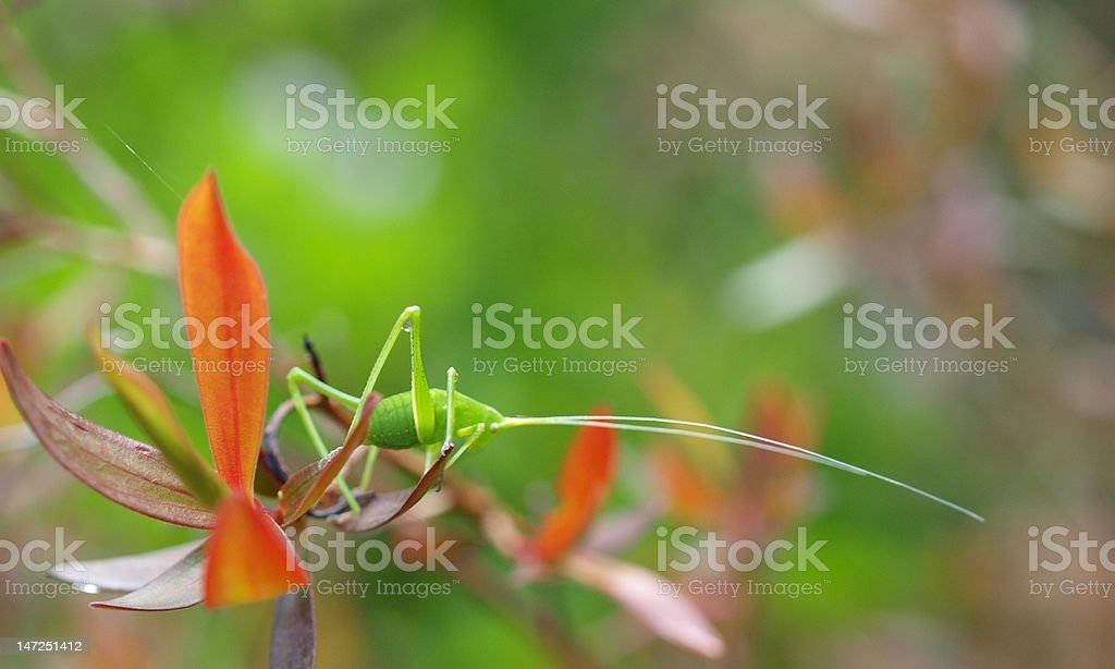 Green Critter royalty-free stock photo
