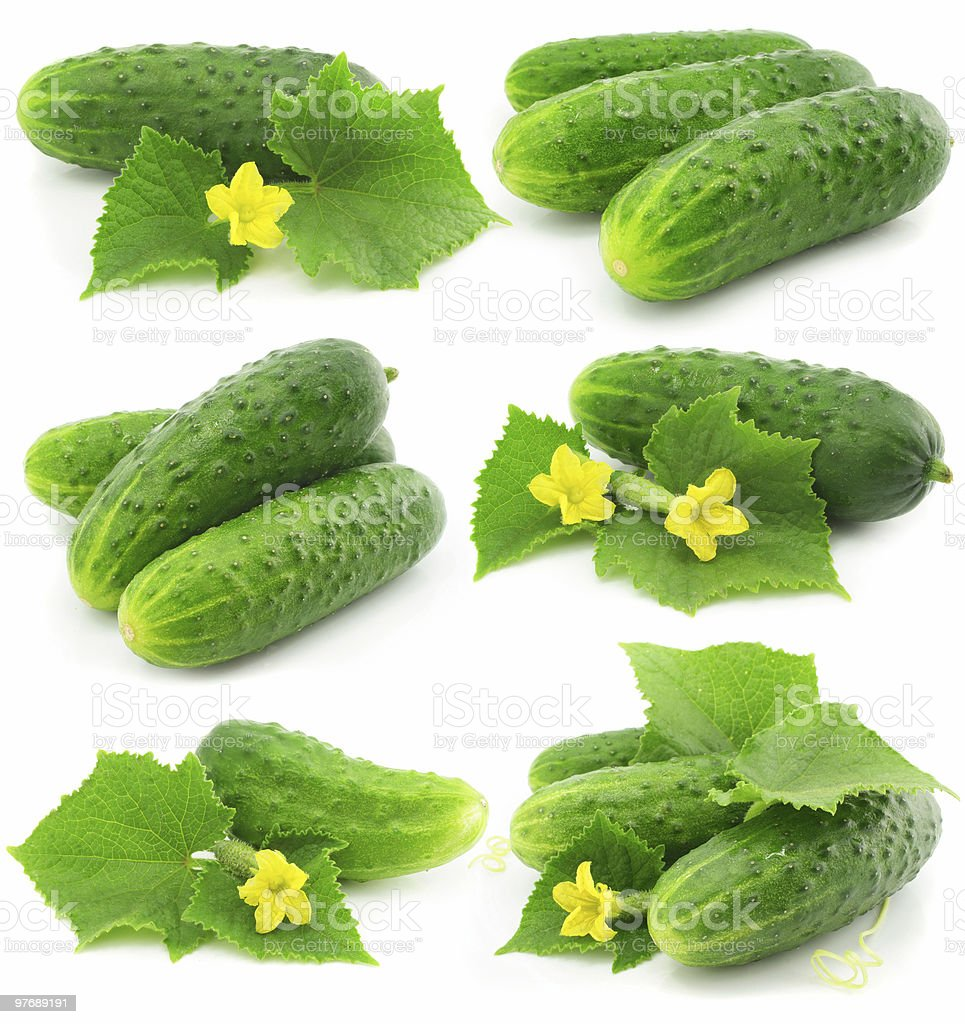 green cucumber vegetable fruits with leafs isolated royalty-free stock photo