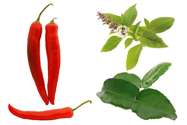 grünes curry zutaten auf weißem hintergrund. - ocimum tenuiflorum stock-fotos und bilder