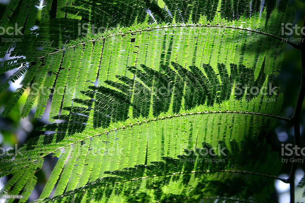 Green curtain of fern stock photo