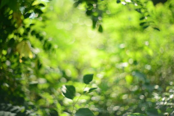 Green unscharf im Hintergrund – Foto
