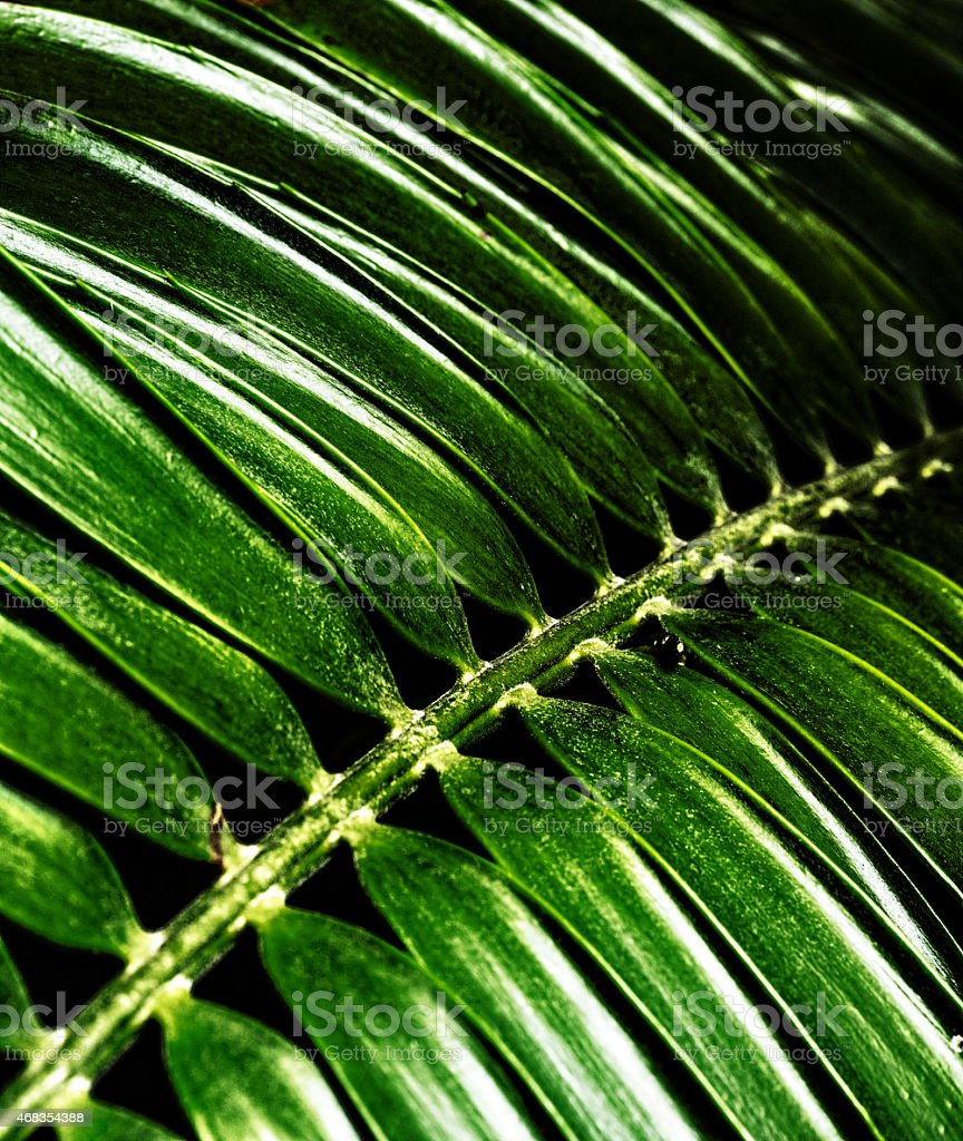 Green detailed leaf royalty-free stock photo