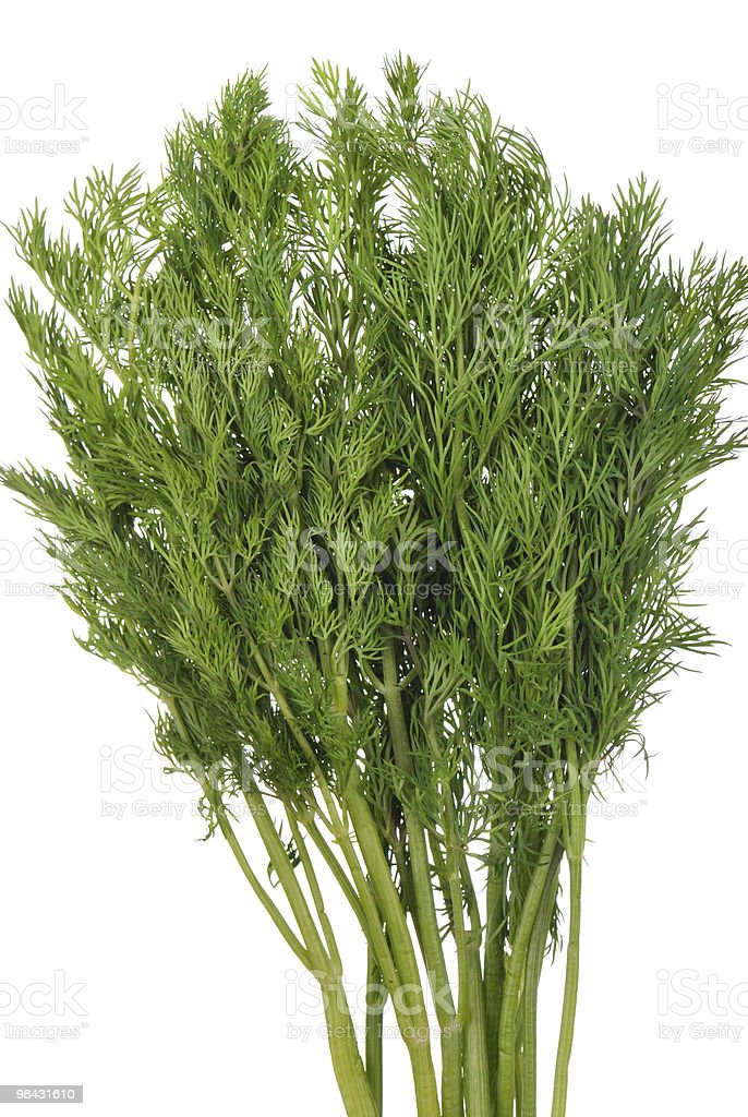 Green dill branches is isolated royalty-free stock photo