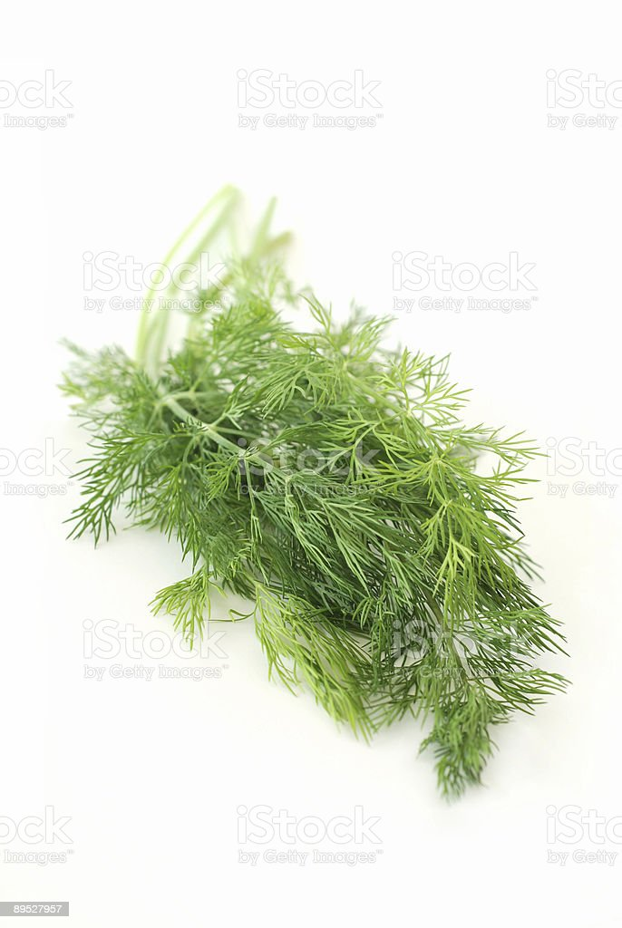 Green dill herb royalty-free stock photo