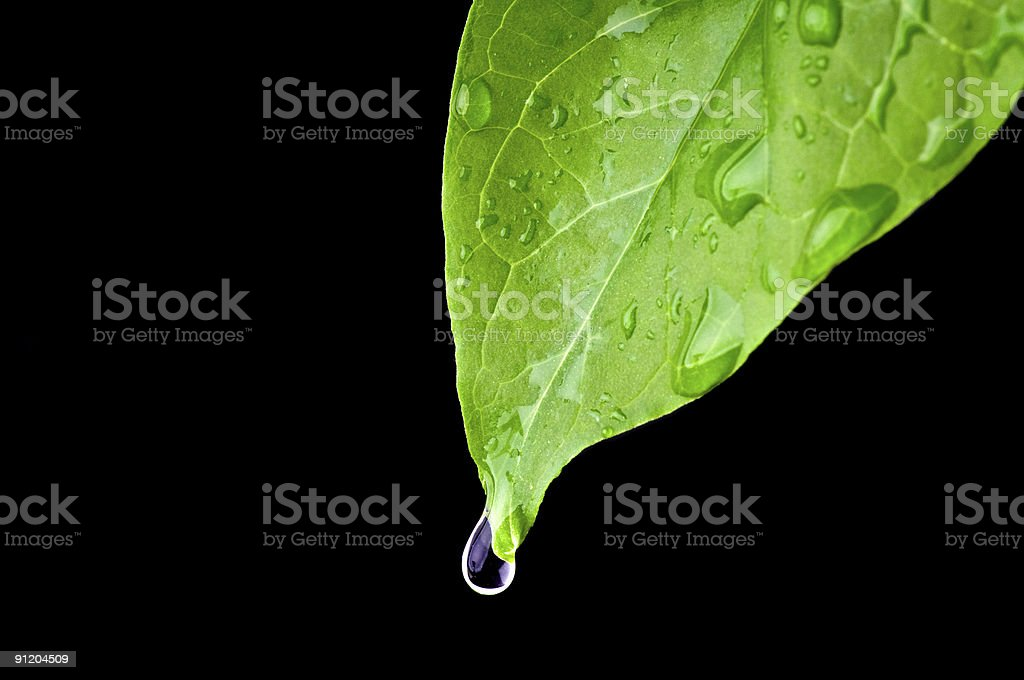 Green dripping leaf royalty-free stock photo