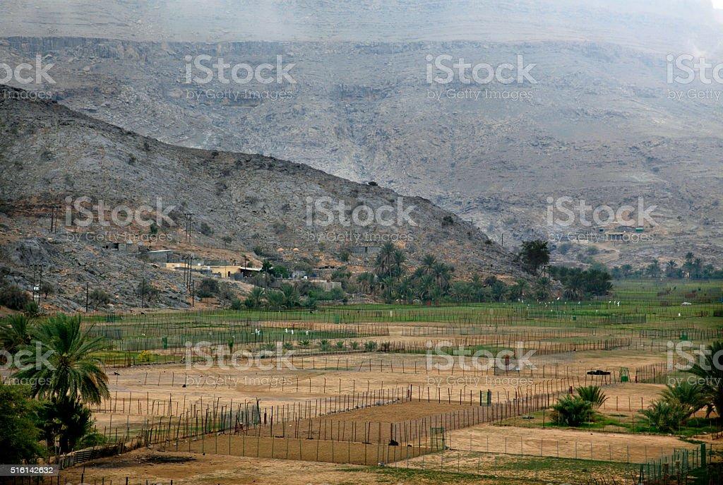 Green Dry wadis in Jebel Harim, Musandam, Oman stock photo
