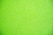 close up green duckweed on a pond background