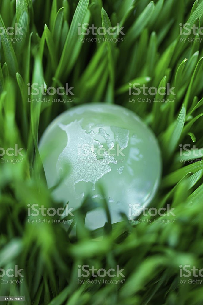 A small earth in a sea of green grass. Shallow dof