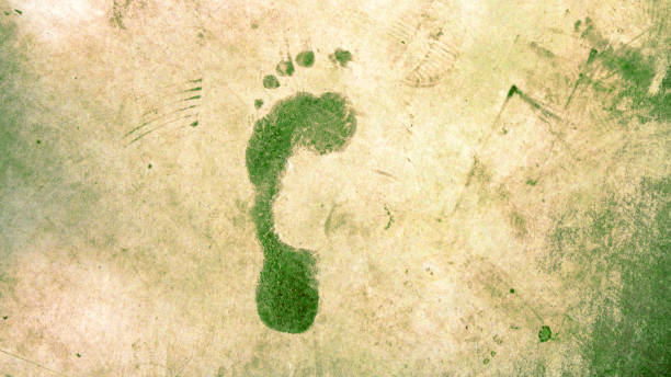 Green ecological footprint Green ecological footprint impact stock pictures, royalty-free photos & images