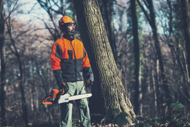 Green economy is against deforestation process Adult lumberjack in woods, cutting trees, using ax, saw and chainsaw in woods in late autumn, to collect the logs for the winter time. Image of one masculine man with beard in woods with work tools. forester stock pictures, royalty-free photos & images