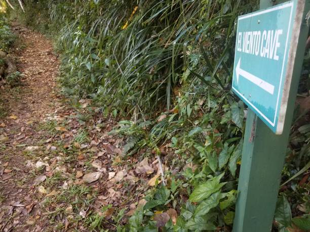 green El Viento, the wind, cave sign with arrow in the Guajataca forest in Puerto Rico with lizard and trail stock photo