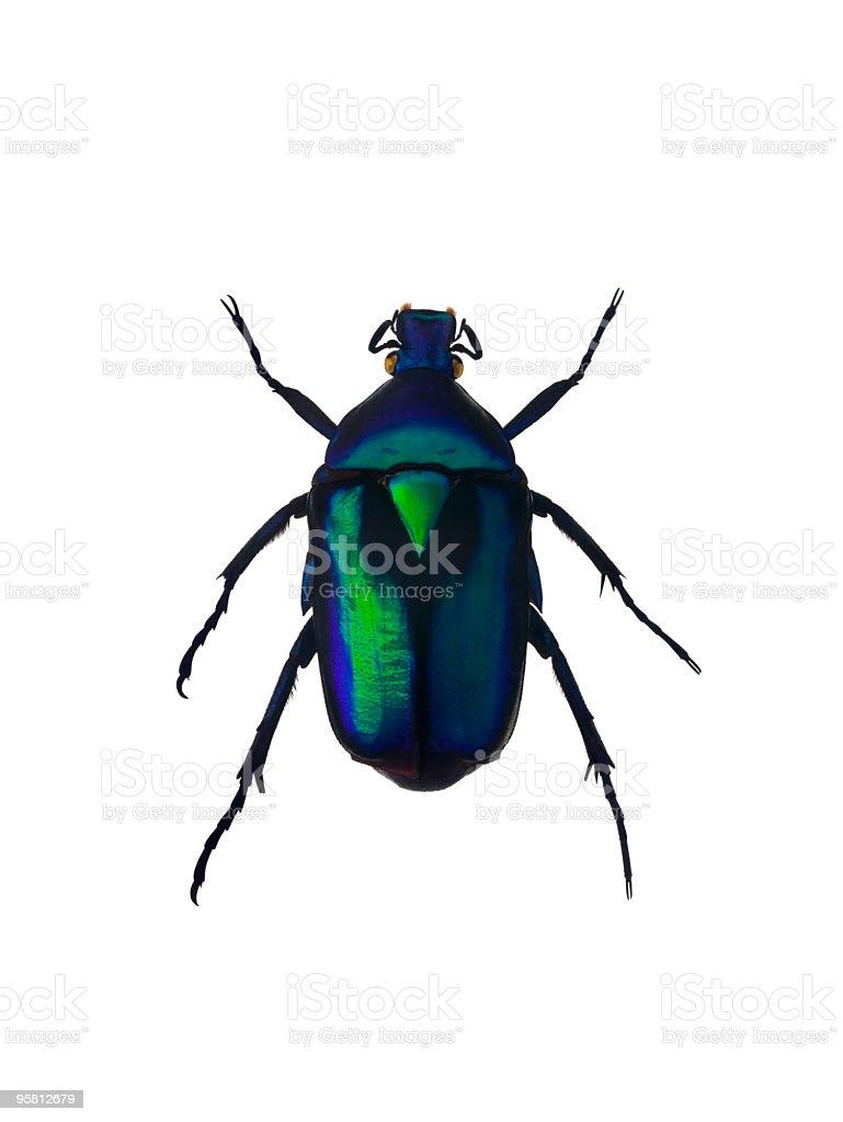 Besouro verde esmeralda - foto de acervo