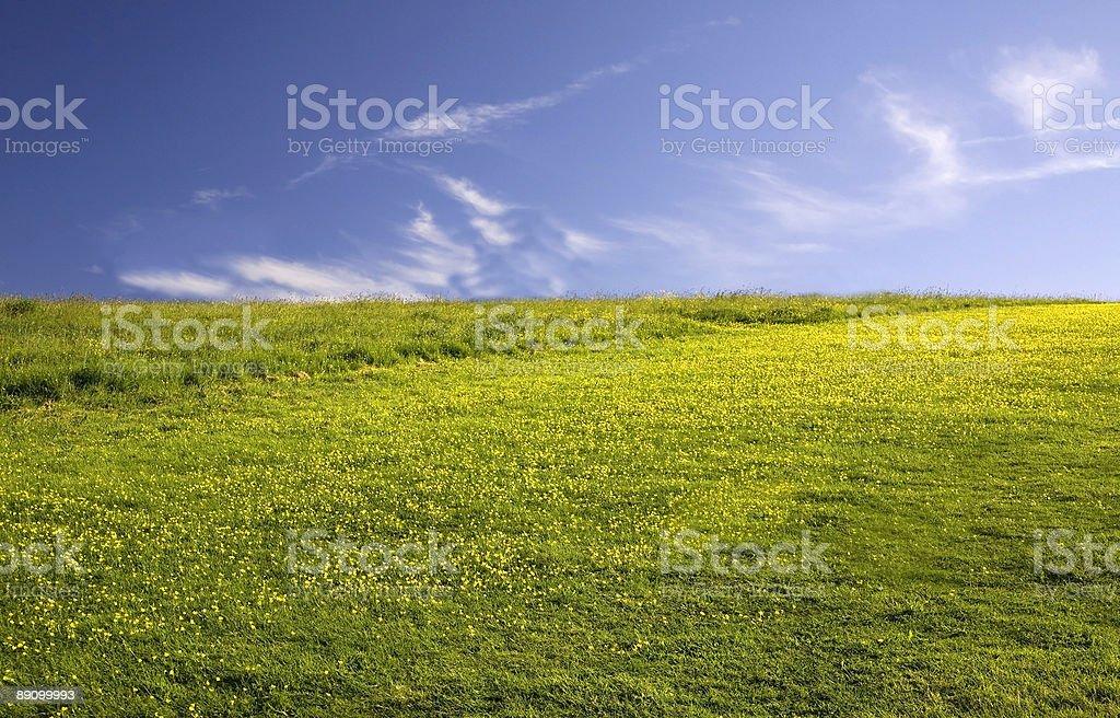 Campo verde vacío con flores amarillas foto de stock libre de derechos