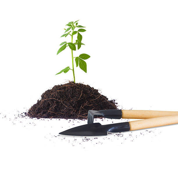 Green energy concept new Young plant and gardening tools isolated on white background, Green energy concept Concept mattock stock pictures, royalty-free photos & images