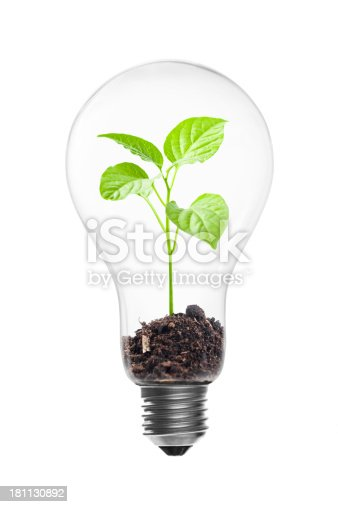 light bulb and sprout, green energy concept