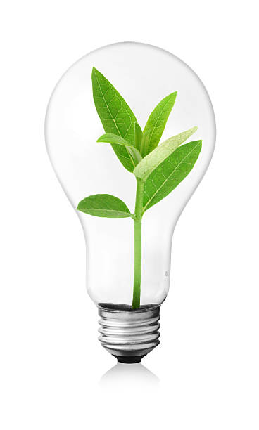 royalty free sprout inside the light bulb pictures images and stock