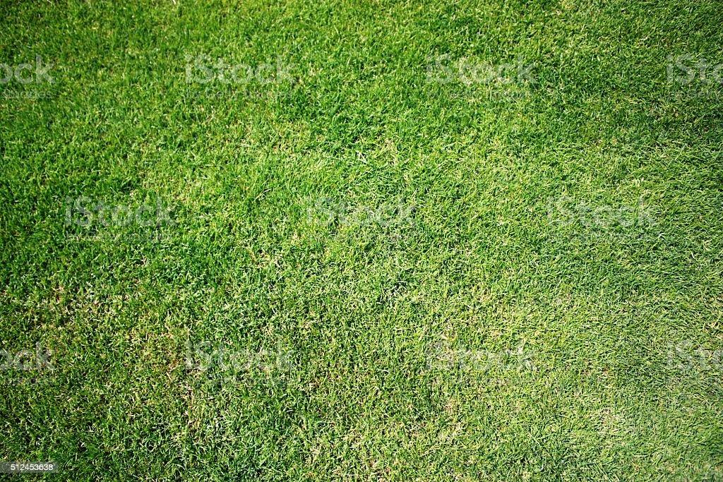 green English lawn stock photo