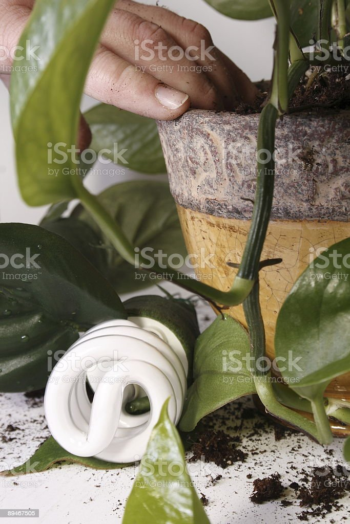 Green environment royalty-free stock photo