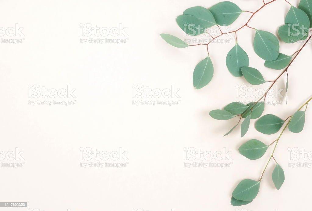 green eucalyptus branches herbs, leaves, plants frame border on...