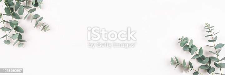 istock Green eucalyptus branches on a white background. 1218980967