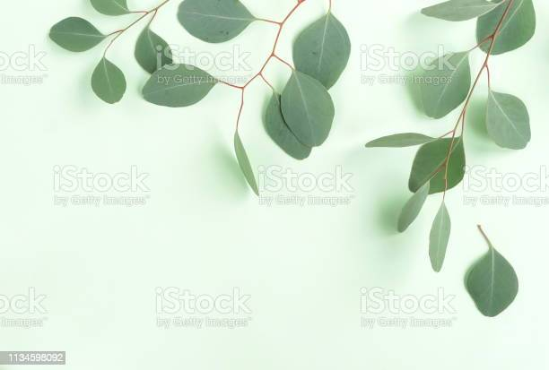 Green eucalyptus leaves herbs branches plants frame border on white picture id1134598092?b=1&k=6&m=1134598092&s=612x612&h=kzq45gr losoc3jesvi f2u8xsfhuimvm015jrbdude=