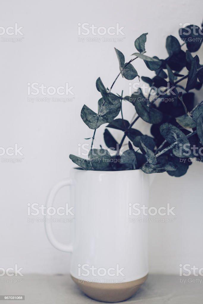 Green eucalyptus stock photo