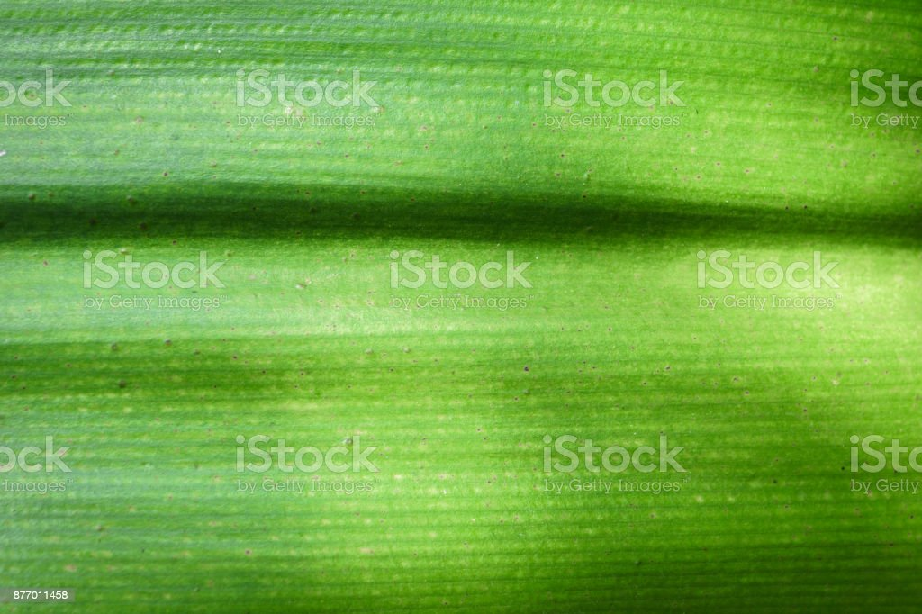 green exotic leaf texture for design use stock photo