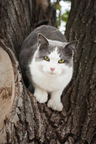 green eyed cat in tree stock photo