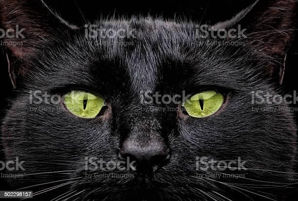 Green eyes picture id502298157?b=1&k=6&m=502298157&s=612x612&h=tj6nmxzyen5oxgcnoqjo7zfqutdllwmob6fvrg0l5c4=