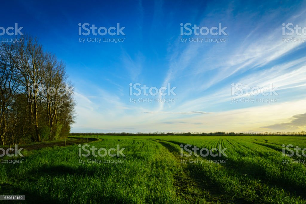 Green farm field in spring, taken at sunset royalty-free stock photo
