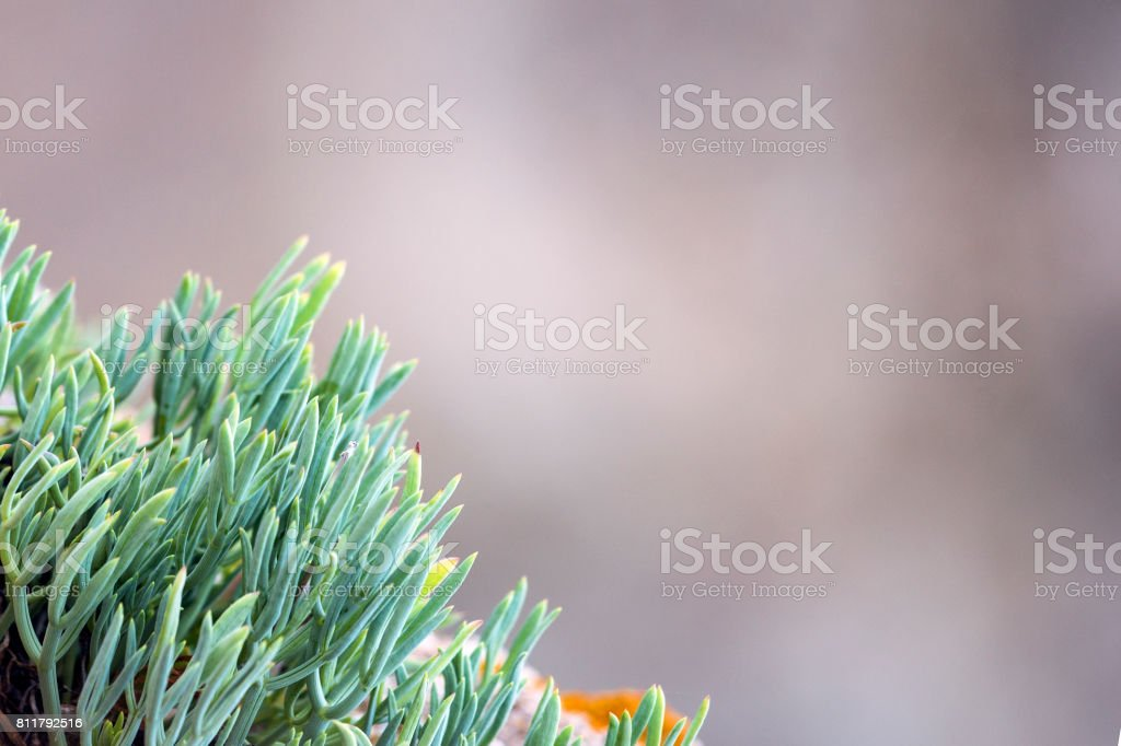 Green fatty plant on a blurred background stock photo