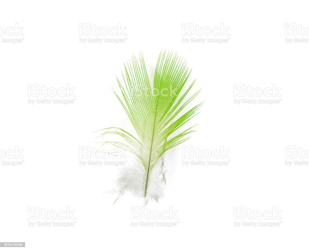 green feather on white background photo libre de droits