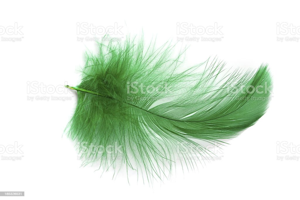 Green Feather royalty-free stock photo