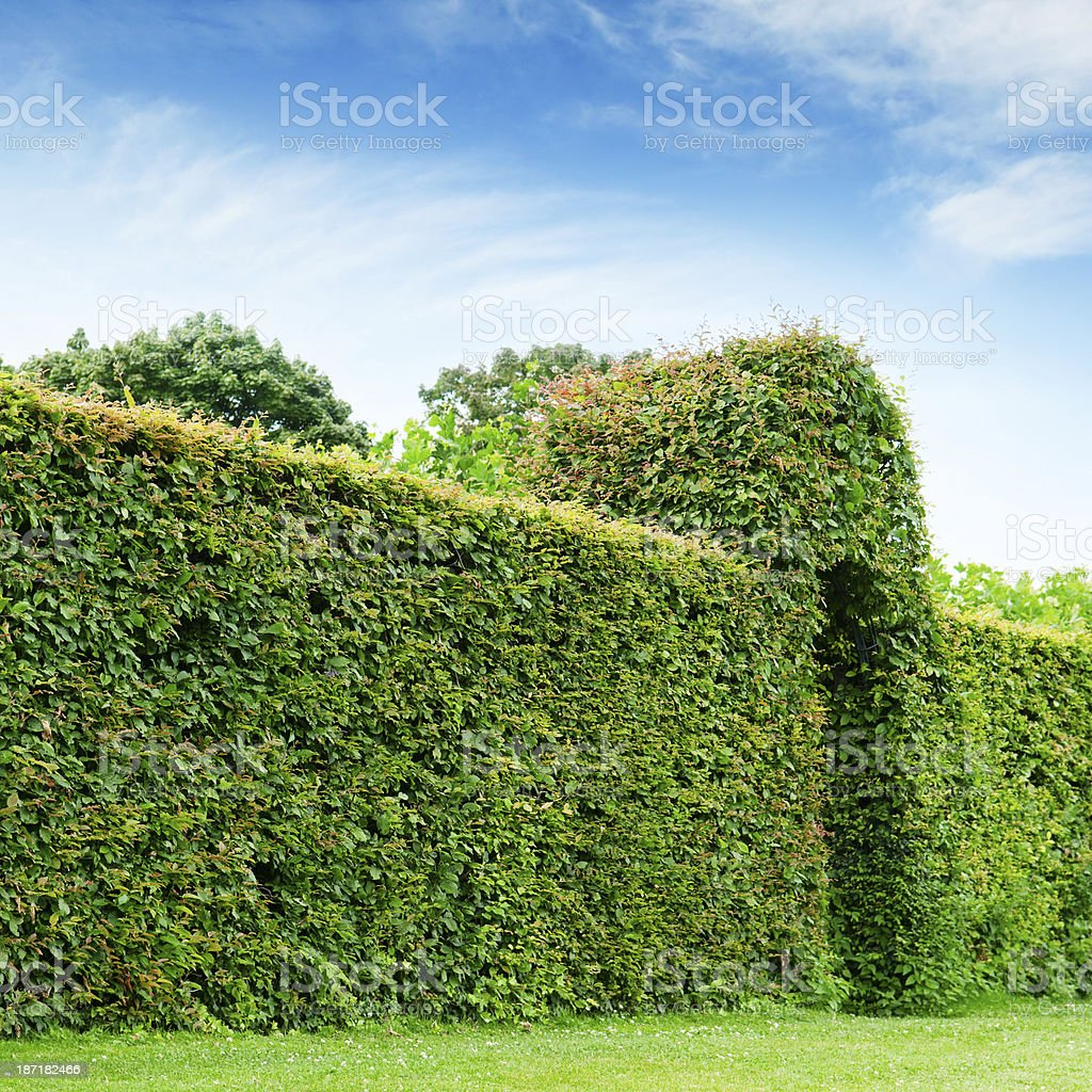green fence in a summer park royalty-free stock photo