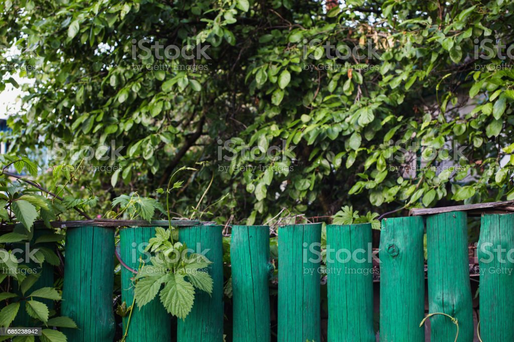 Green fence in the background of green foliage. Summer time. Space for text. foto de stock royalty-free