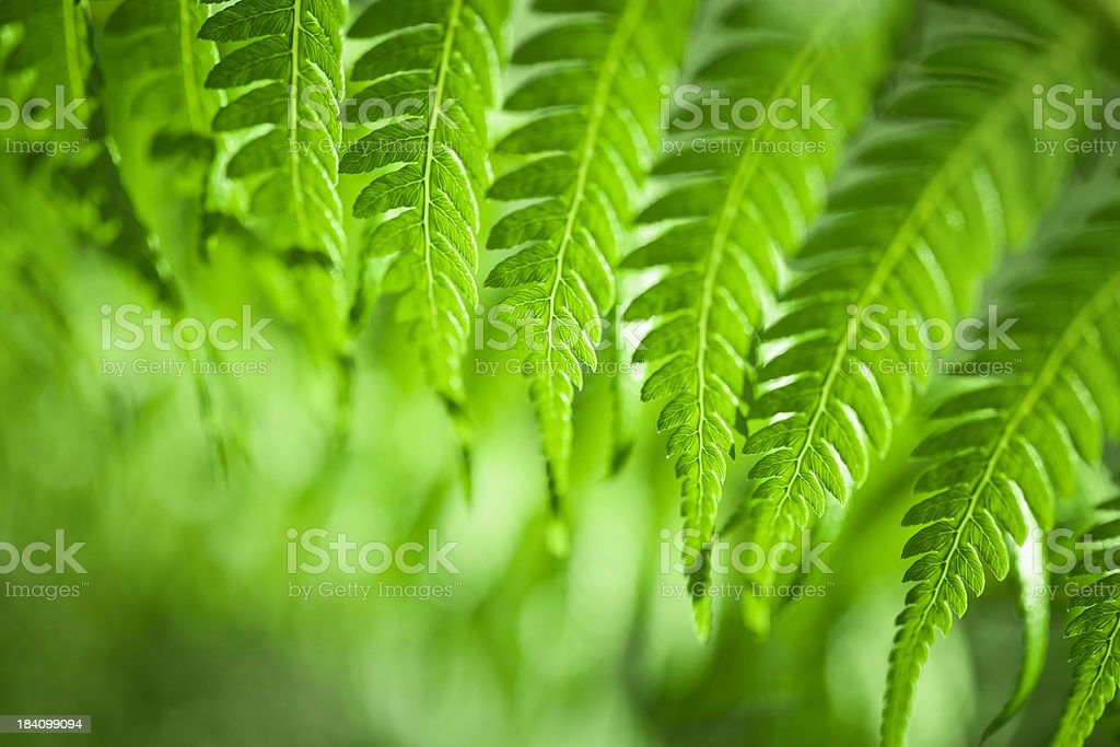 Green fern background stock photo