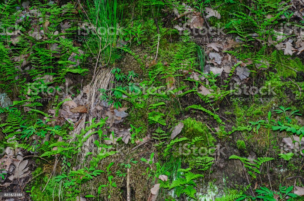 Green fern in a forest stock photo