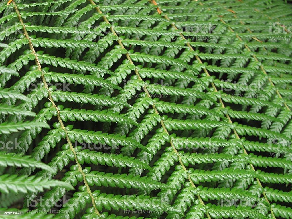 Helecho verde hojas de fondo Texturizado foto de stock libre de derechos