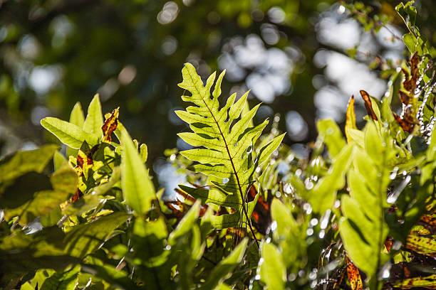 Green fern leaves against the sun light stock photo