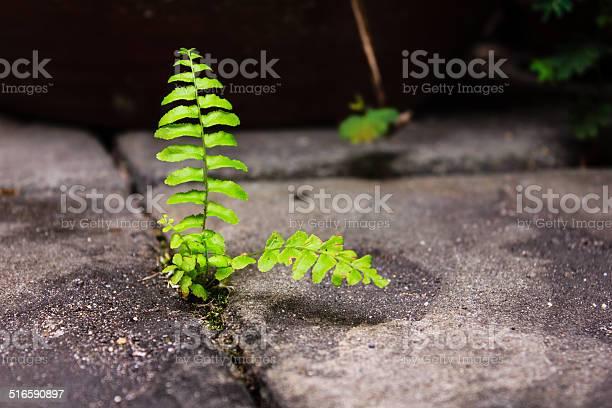 Photo of Green fern