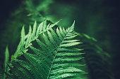 istock Green Fern 655052762