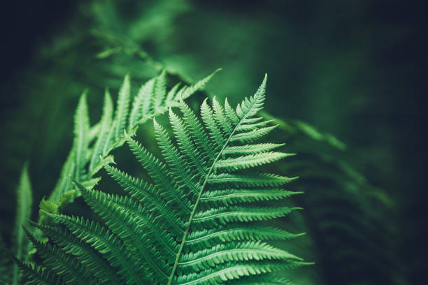 Green Fern Close-up shot of fern leaves. fern stock pictures, royalty-free photos & images
