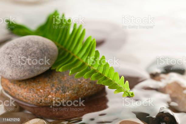 Photo of green fern with rocks in river
