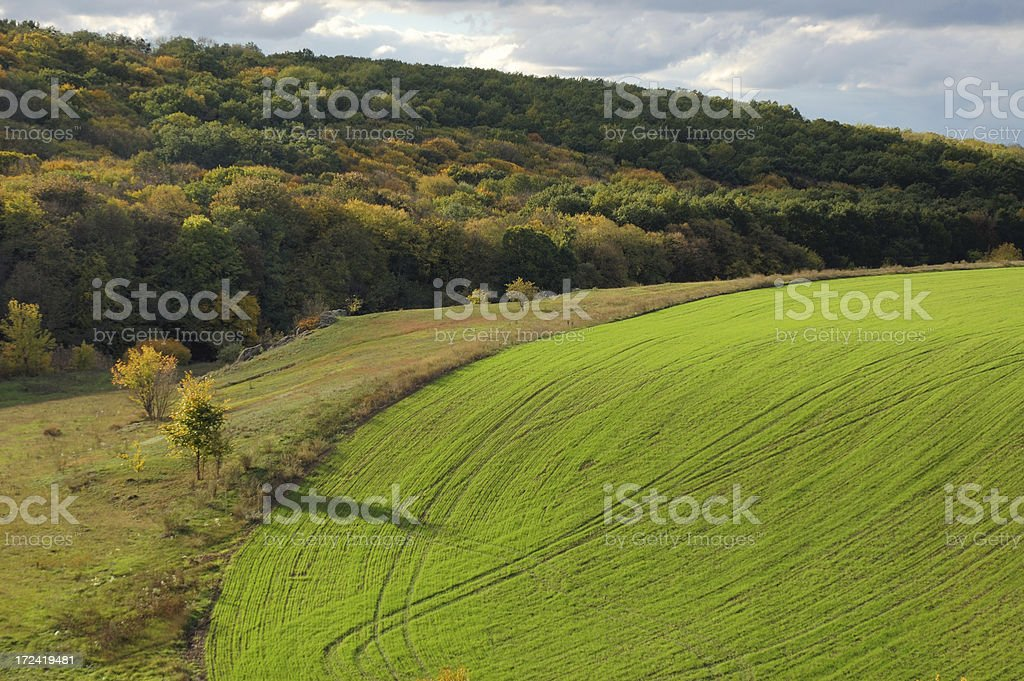 Green field and autumn forest royalty-free stock photo