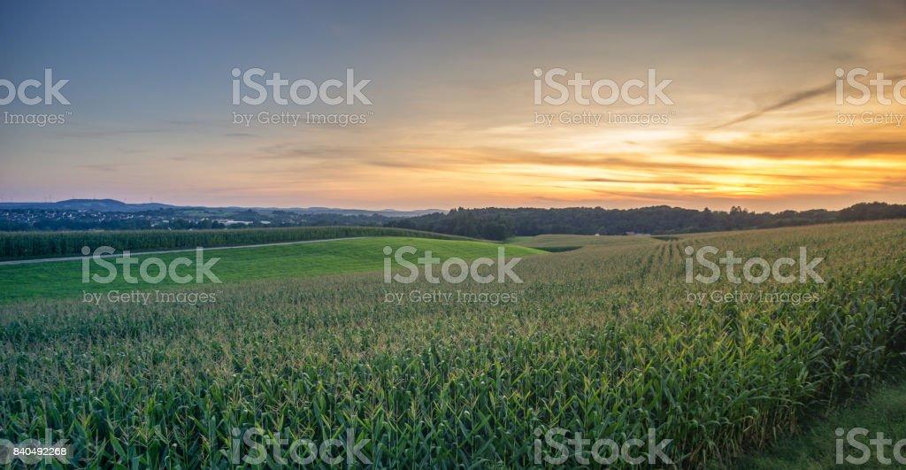Green Field und wunderschönen Sonnenuntergang mit einem Maisfeld im Vordergrund. – Foto