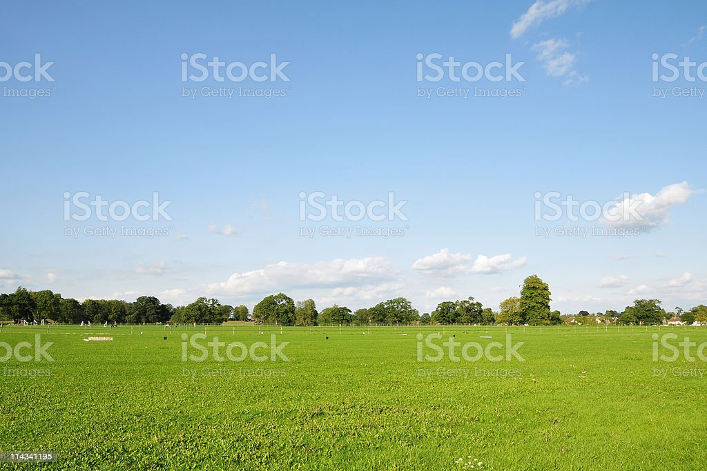 Green Field and Blue Sky in Summer stock photo