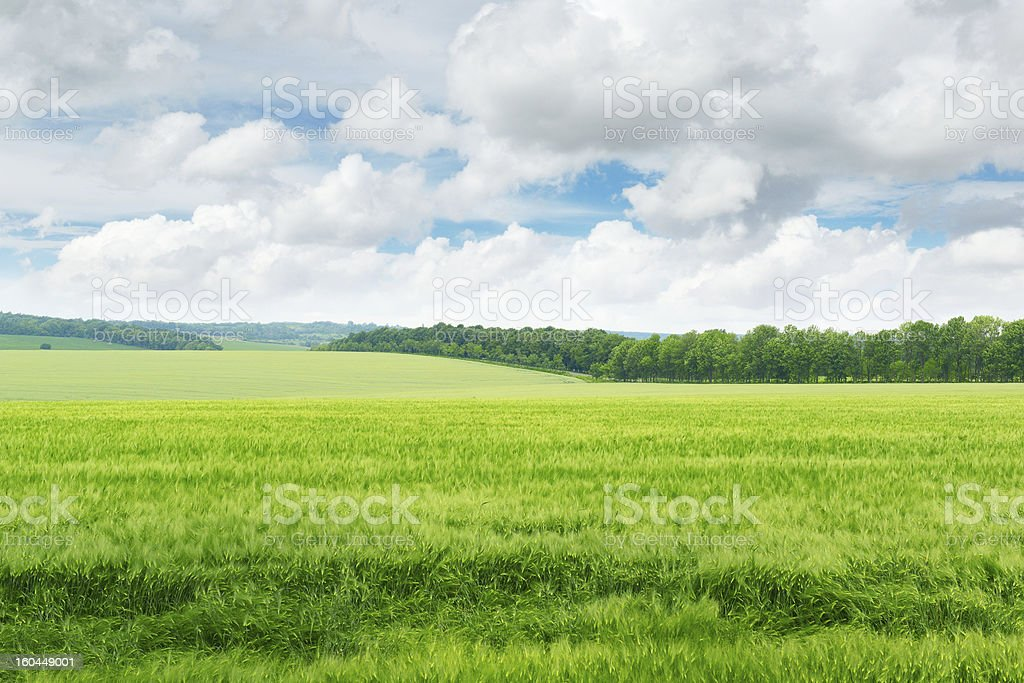 green field and blue sky royalty-free stock photo