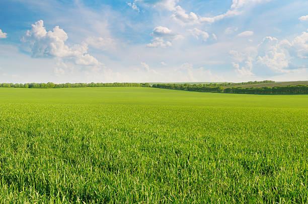 green field and blue sky - vlakte stockfoto's en -beelden