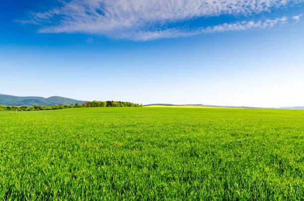 green field and blue sky - field stock photos and pictures