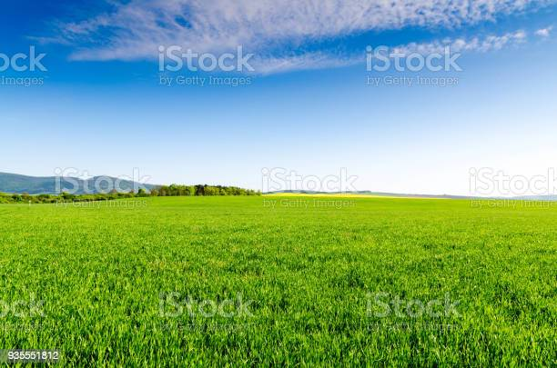 Photo of green field and blue sky